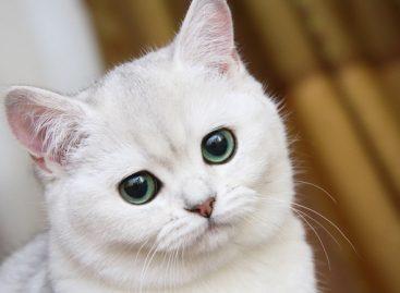 В США определили самое лучшее видео про котов