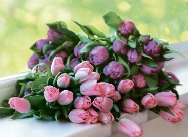 Как правильно дарить цветы:  правила цветочного этикета