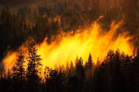 Федеральная Авиалесоохрана сообщила о пожарах на общей площади около 170 га