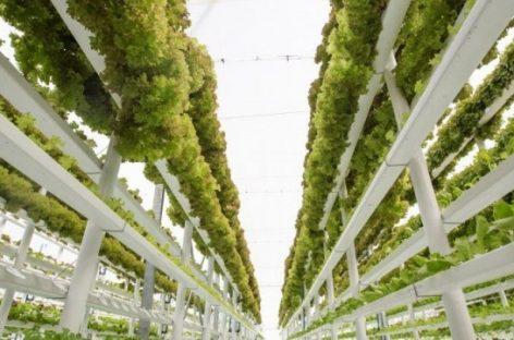 Крупнейшую в мире вертикальную ферму построят в Дубае