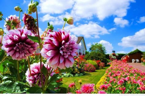 Самые популярные садовые цветы: топ 10