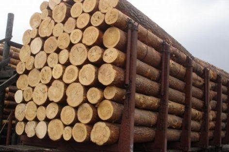 В Томской области раскрыли схему многомиллионной контрабанды леса