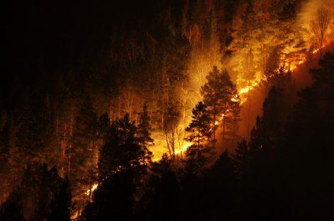 В Авиалесоохране отчитались о пожарах в регионах