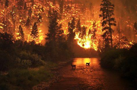 В Гидрометцентре рассказали о пожароопасных регионах