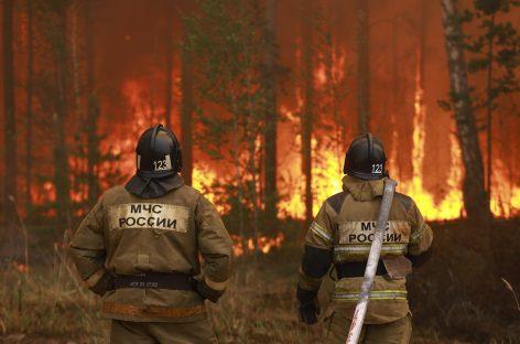 В Рослесхозе отчитались о пожарах в стране