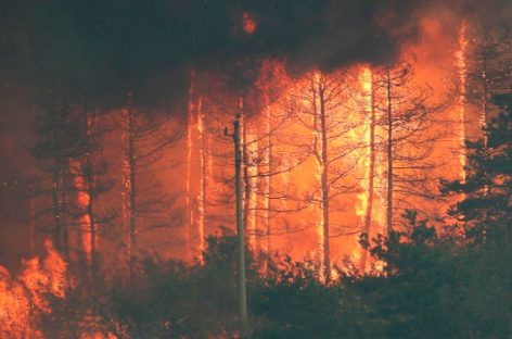 Ситуация с пожарами в России продолжает стабилизироваться
