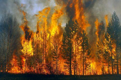 В Авиалесохране рассказали о действующих пожарах