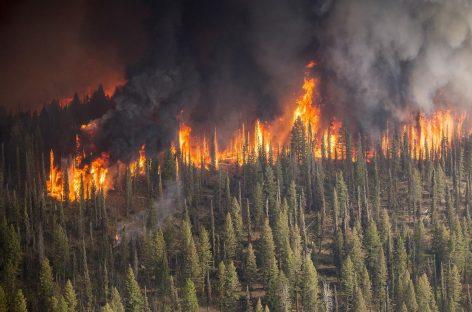 В Авиалесохране отчитались о пожарах в стране